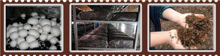 Обучение технологии выращивания грибов 85